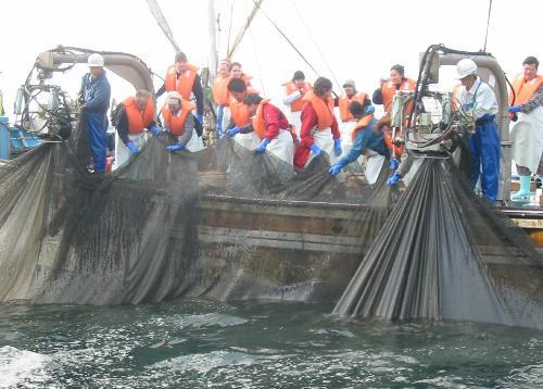 漁業体験の紹介
